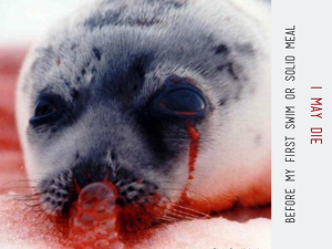 Stop Seal Slaughter and Hunt